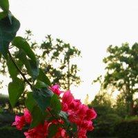 Цветы :: Evgeniy Ignashin