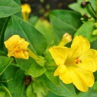 Осенние цветочки :: Лидия (naum.lidiya)