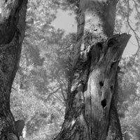 Причуды природы :: Angelika Faustova