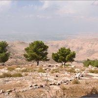 На севере Иордании :: Lmark