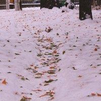 Снежными осенними дорожками :: Татьяна Ломтева