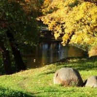 Приречной камушек. :: Владимир Гилясев
