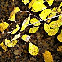 листья :: Татьяна Королёва
