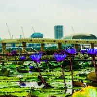 Сингапур :: Олег Куваев