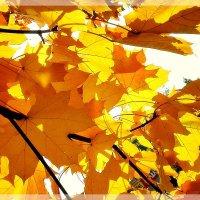 Еще раз про осень... :: Ирина Князева