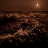 И настало утро на планете...3. :: Андрей Войцехов