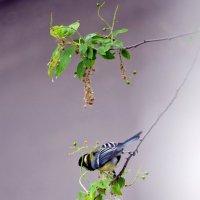 Птицы из окна :: ирина