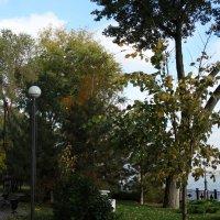 Осенняя картина... :: Тамара (st.tamara)