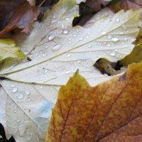 Осень :: Яна Чепик