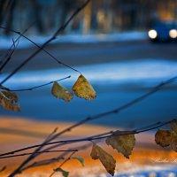 Зима!! :: סּﮗRuslan HAIBIKE Sevastyanovסּﮗסּ