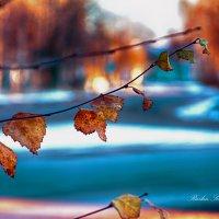Замершие листья :: סּﮗRuslan HAIBIKE Sevastyanovסּﮗסּ