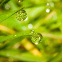 капли дождя :: Валерий Тёсса