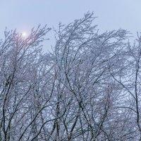 Деревья во льду :: Владимир KVN