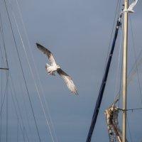 Чайка :: Witalij Loewin