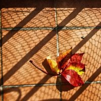 Осень золотая :: Svetlana Sneg