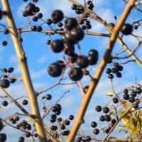 Лесные ягоды(2) :: Любовь