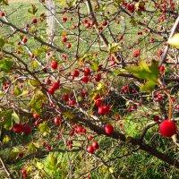 Лесные ягоды(1) :: Любовь
