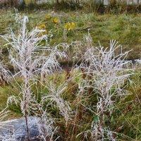 Поседевшие травы :: Ольга