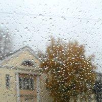 Осень за стеклом. :: nadyasilyuk Вознюк