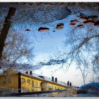Отражение... :: Irina Schneider