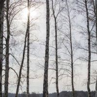 Зима :: Андрей Чиченин
