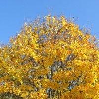 Золотая осень :: Яна Чепик