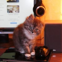 Кошка и мышка :: Владимир Федоров