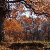 Осенние дубравы :: Ирина Голубева