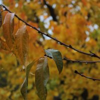 Осень :: Людмила Тарасова
