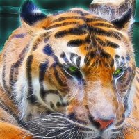 Тигрик:)) :: Марина Назарова
