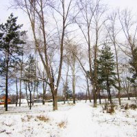 Пришла зима , рассыпалась снегами . :: Мила Бовкун