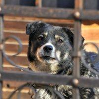 Осторожно,добрая собака! :: Андрей Куприянов