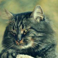 Мой кот(2) :: Олег Ветер