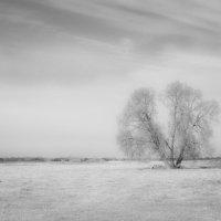Одиночество :: Elena Ignatova