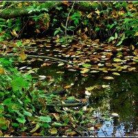 лесной ручей :: Дмитрий Анцыферов