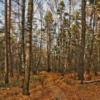 В осеннем лесу :: Alexandr Zykov
