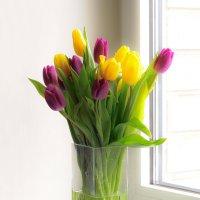 Тюльпаны :: Lika Shakhmatova