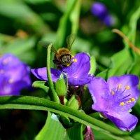 Пчёлка :: Саня Костылев