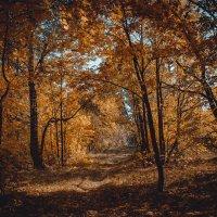 Осенний коридор :: Наталья Гранфельд