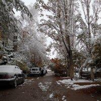 Первый снежок :: Андрей Солан
