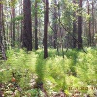 Трава и деревья :: Александр