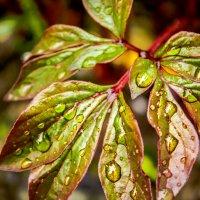 Rain drops :: Ruslan Shir