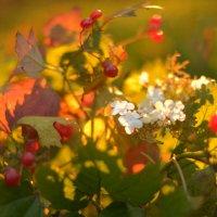 калина осенью цветёт :: Dorosia