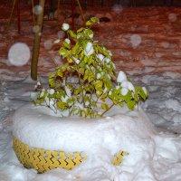 нежданно пришла зима :: Светлана