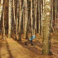 В осеннем лесу. :: Ирина Нафаня