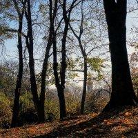 """Осень в парке """"Аскольдова могила"""" Фото №1 :: Владимир Бровко"""