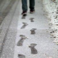По первому снегу. :: Евгения Кирильченко