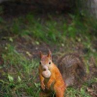 И орешки все грызет :) :: Наталия Галуза