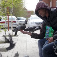 Птица мира. :: Viktor Сергеев