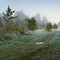 дорога в туман :: Александр Потапов
